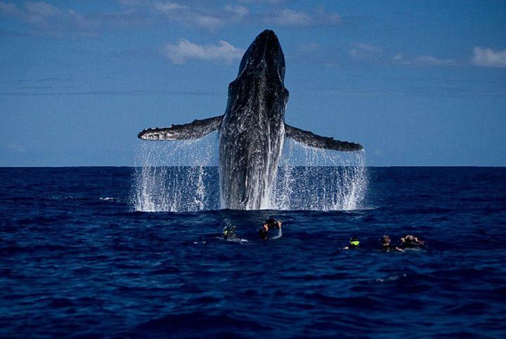 Treasure Island Whale Watching