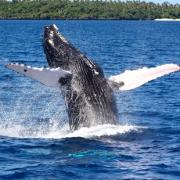 Jane Jefferies whale watching
